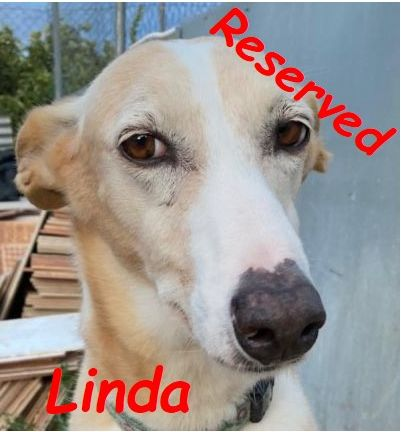Dog of the month Linda