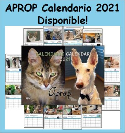 2021 Calendario Disponible